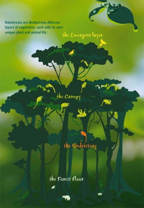 Rainforest10