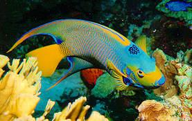 Coolfish