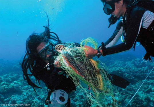 Bycatch-oceana-report-4-david-burdick-537x373