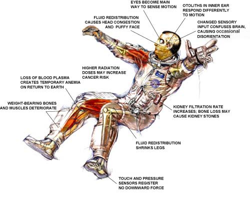 Effects of space on body