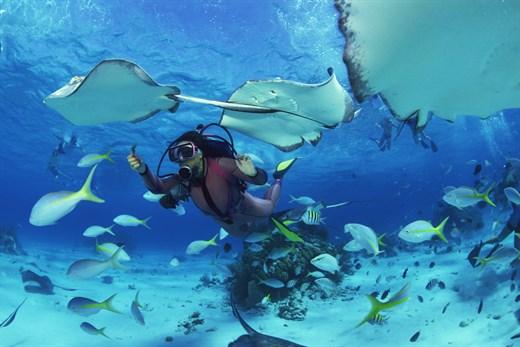 Diver 11
