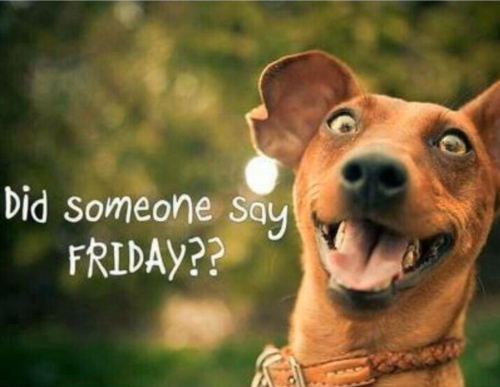Friday Dog